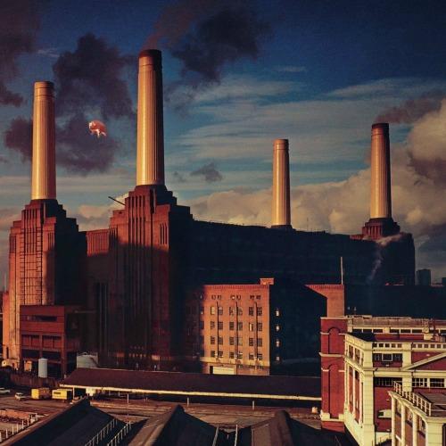1977 – Animals