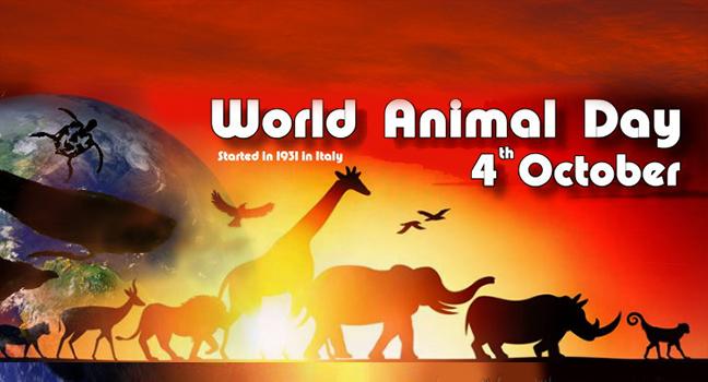 List It Up | 20 τραγούδια για τα… ζώα!